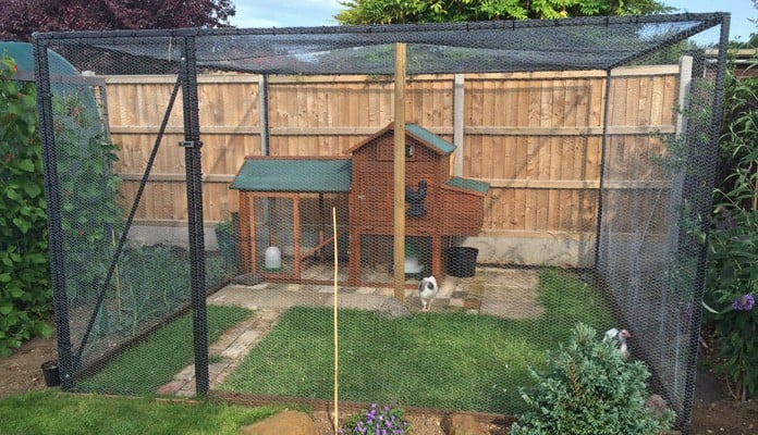 3m x 3m Steel Poultry Cage with Chicken Wire, Mr and Mrs Raby - Norfolk