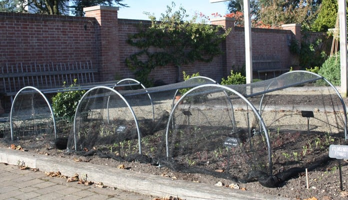 Medium Garden Netting Hoop, Chewton Glen Kitchen Garden