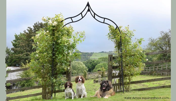 Ogee Arch foreground & Bespoke Ogee Arch behind, Holly Woody and Myla - West Yorkshire