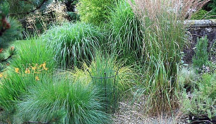 90cm H Black Trumpet Plant Supports, Mr Wagstaff - Lancashire