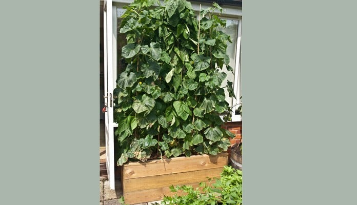 2ft x 4ft Allotment Raised Beds, Mrs. Titchiner - Suffolk