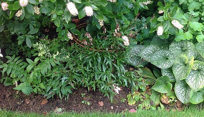 30cm Dia Circular Plant Support, Mrs Taylor - Surrey
