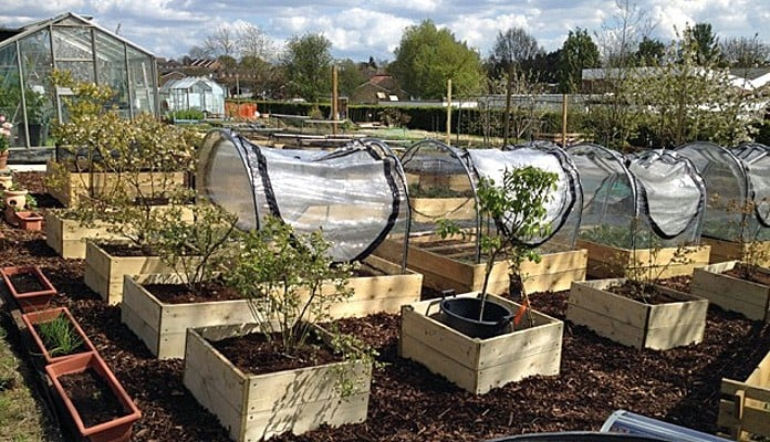 4ft x 4ft Allotment Raised Beds and Hoop and PVC Covers , Mrs Hine - Kent