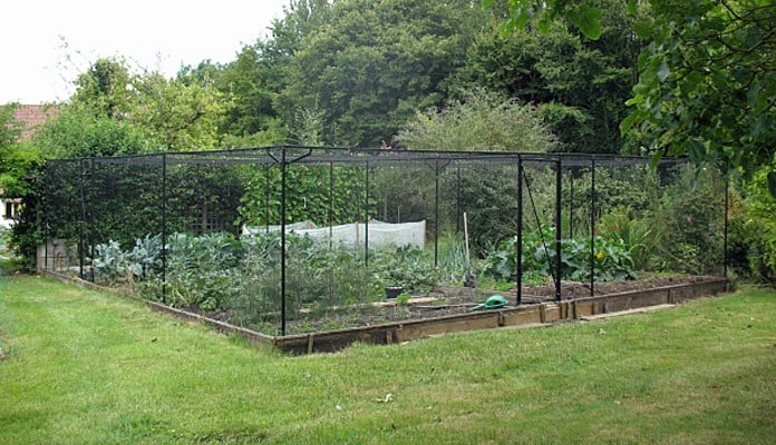 10.5m x 10.5m Bespoke Steel Fruit Cage, Mr Reason - Norfolk