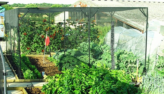 4.75m x 4m Bespoke Sloped Steel Fruit Cage, Mrs Tustain - Oxfordshire