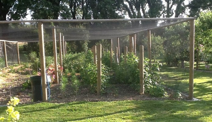 14.4m x 7.2m Timber Fruit Cage, Mr Rochez - Chichester