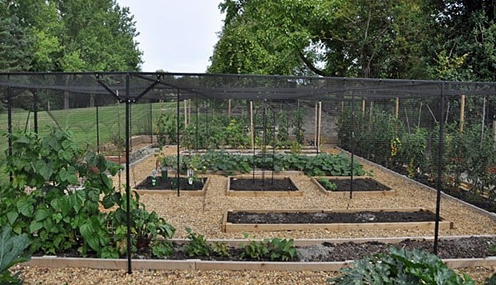 12m x 8m Steel Fruit Cage, Mr and Mrs McBride - Cambridgeshire