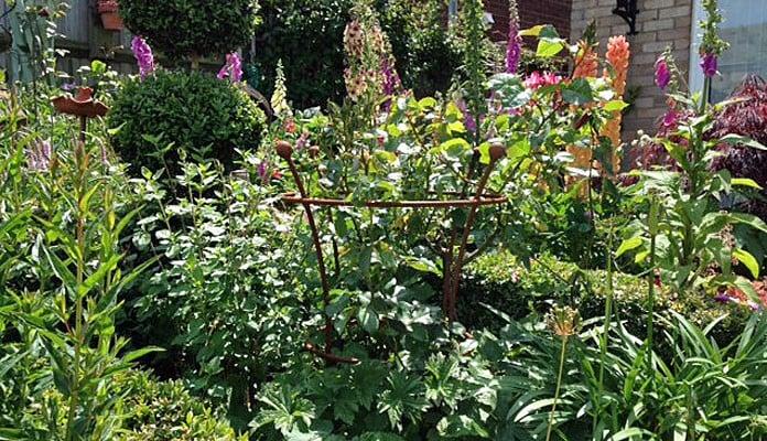 40cm Dia Rust Trumpet Plant Support, Mrs Uden - Norfolk