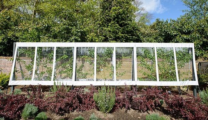 Contemporary Fruit Tree Cover & Frame