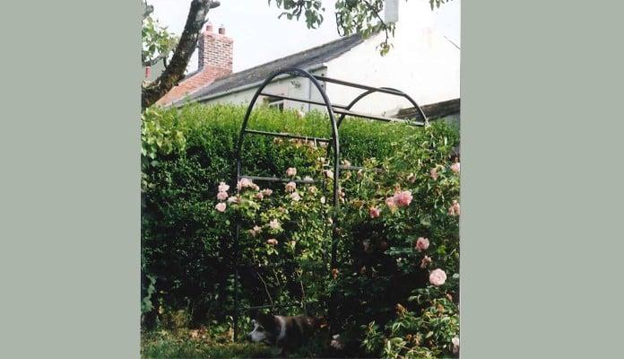Roman Rose Arch, Mrs Baines - Cumbria