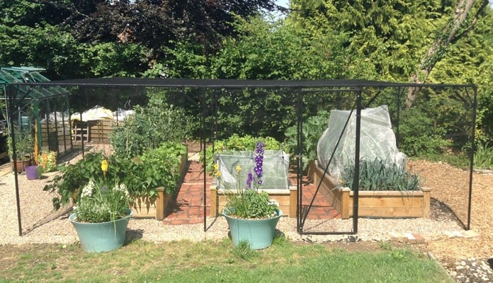 6m x 6m Steel Fruit Cage, Mrs Roberts - Buckinghamshire