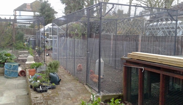 2m x 6m Steel Poultry Cage, Mr Harvey - Essex