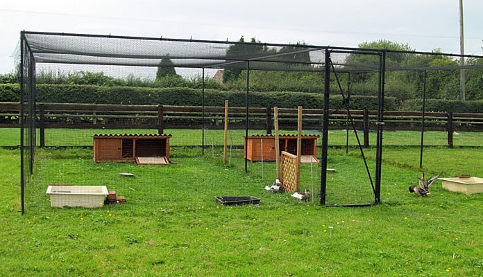 6m x 7m Steel Poultry Cage, Mrs  Green - Leicestershire