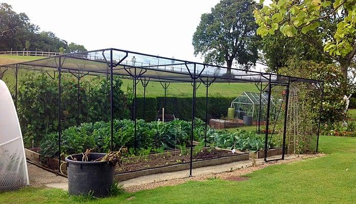 Fruit Cage Steel Sloped 4