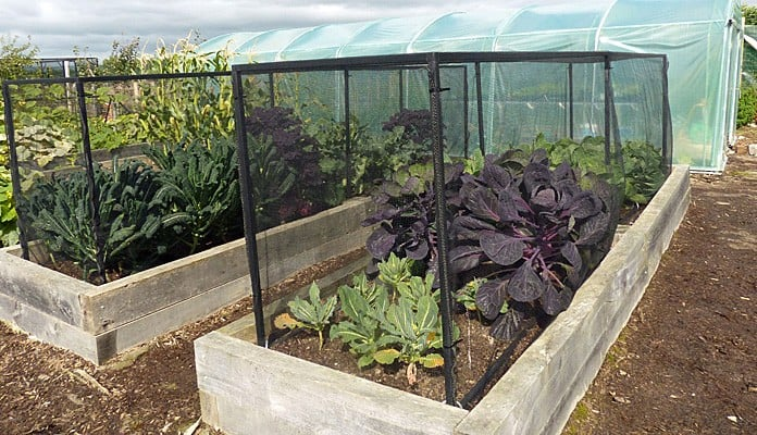 4.45m x 0.9m Bespoke Portable Steel Brassica Cage, Mr and Mrs Ford - Devon