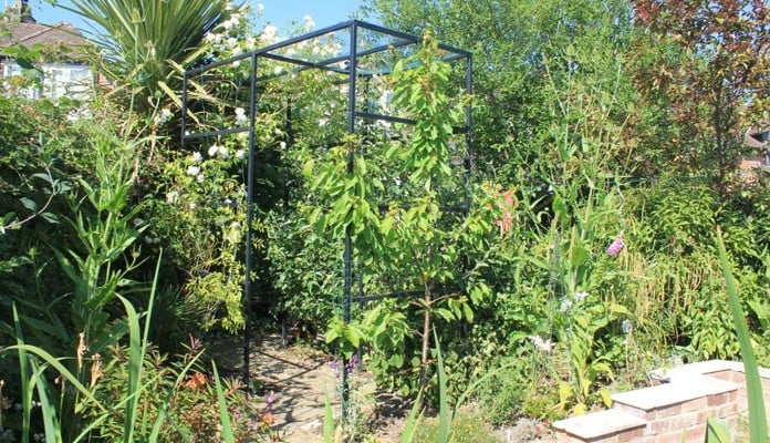 Square Arch Walkway Complete with Apple, Cherry, Rose, Banana And Palm Plants