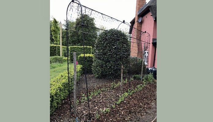 Black Vintage Bean Frame Starter and Extension Kit, Mrs Jones - Buckinghamshire