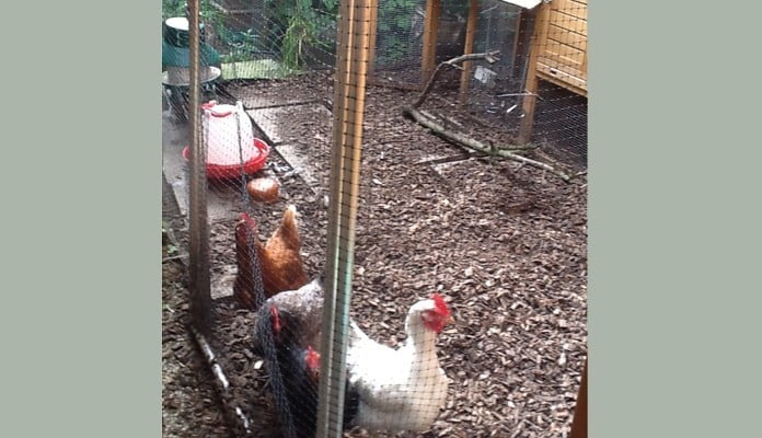 2.5m x 3m Aluminium Poultry Cage, Mrs Caudwell - Nottinghamshire