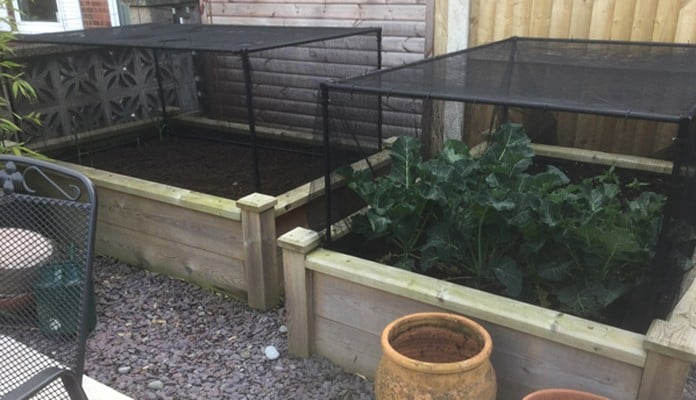 Slot & Lock Cages Butterfly Netting 4ftx6ft Superior Raised Beds, Mrs Straw - Derbyshire