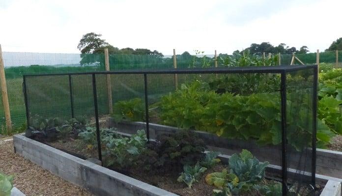 4.45 x 0.9m Bespoke Portable Steel Brassica Cage - Mr and Mrs Ford, Devon
