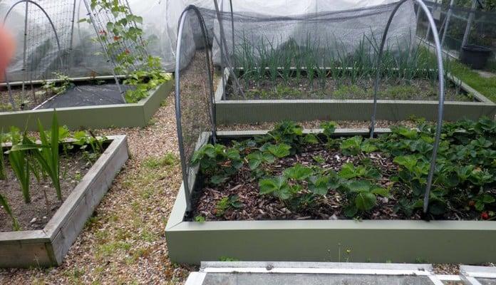 MRB-002 Superior Metal Raised Beds Heritage Green, Mr Tigwell - Surrey