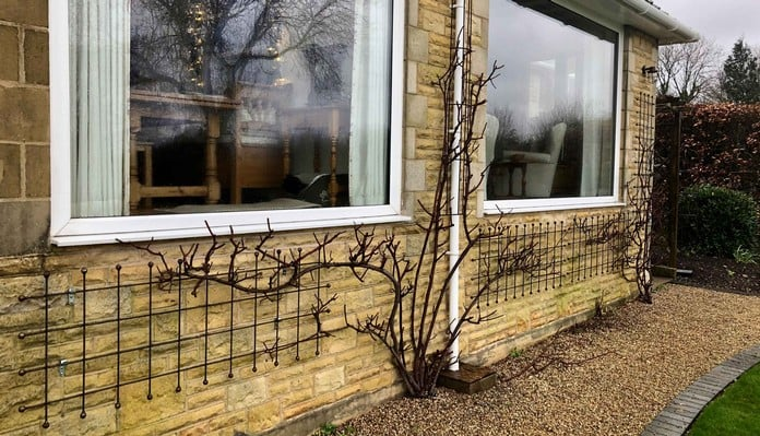 Decorative Rust Natural Wall Trellis - Mrs Garner, Leicestershire