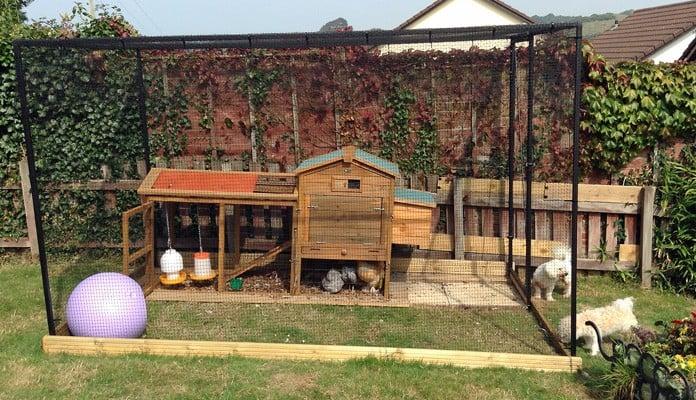 2m x 3m Steel Poultry Cage, Mrs Walters - Devon