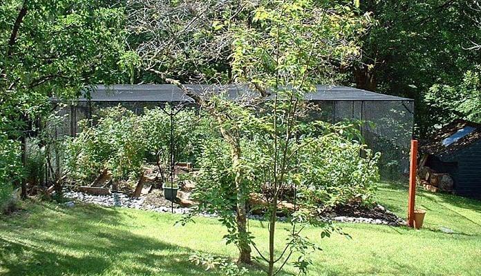 7.6m x 6.03m Bespoke Sloping Steel Fruit Cage, Mr Aitken - Scottish Highlands