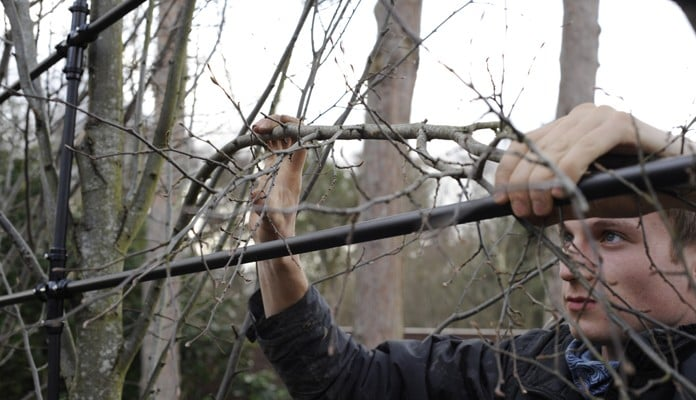 Training Hornbeam Pleach Branches To  Frame