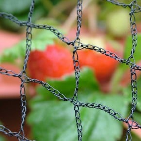 Bird Netting & Fruit Cage Netting