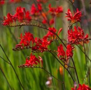 Herbaceous Garden Plants