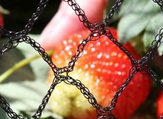 Garden & Plant Netting