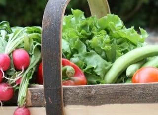 Garden Trugs & Baskets