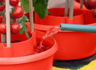 Planter & Growbag Watering