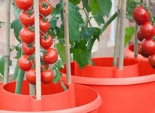 Tomato & Vegetable Planters