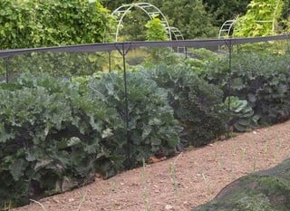 Vegetable Cages