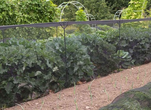 Build Your Own Fruit & Vegetable Cages