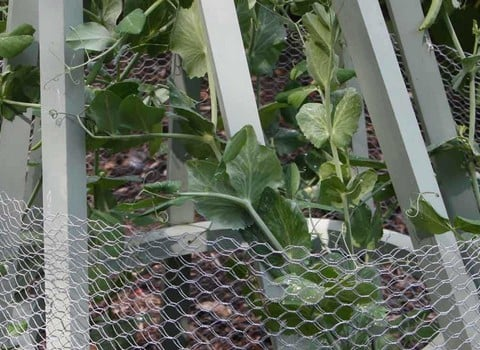 Chicken & Poultry Netting