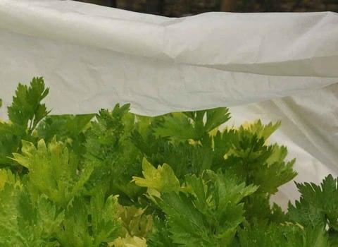 Garden Fleece & Plant Covers