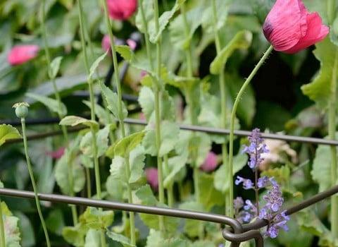 Garden Plant Stakes