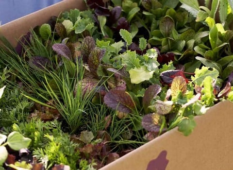 Lettuce & Salad
