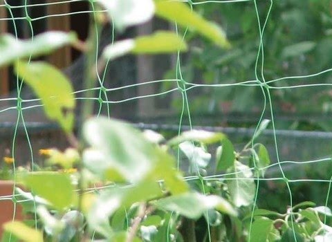 Pea & Bean Netting
