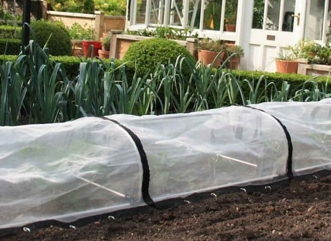 Plant Cloches & Tunnels