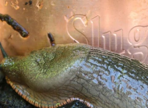 Slug Pest Control