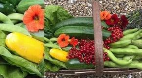 A good harvest this week in the Kitchen Garden