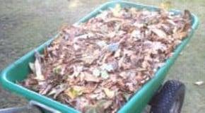 Autumn is creeping into the garden
