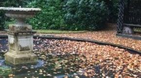 Big Autumn Clear Up Begins
