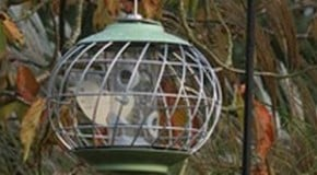 Caring for Birds in Winter