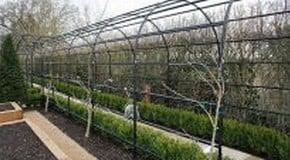 Creating a Scented Garden Walkway
