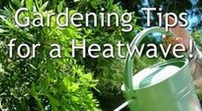 Gardening in a Heatwave!